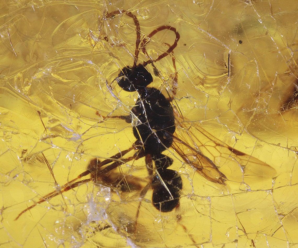 حجر كهرمان يحتوي على حشرة
