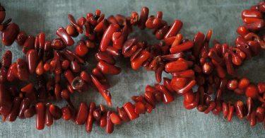 المرجان الأحمر