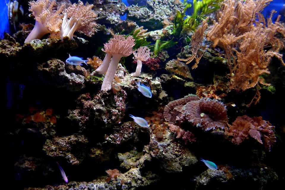 أصل حجر المرجان