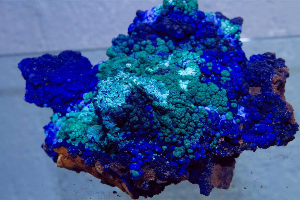 كيف يتكون المرجان في الطبيعة