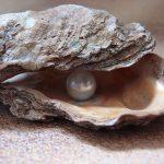 كيف يتكون حجر اللؤلؤ